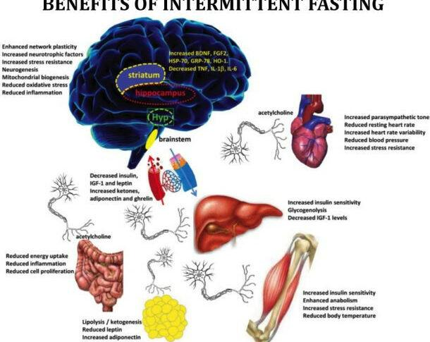 Intermittent Fasting – 10 x Health Benefits
