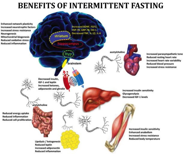 Benefits Of IF