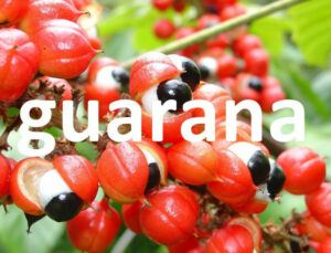 Guarana Plant
